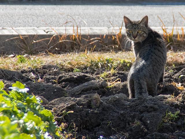 猫(ねこ)の写真(フリー素材)