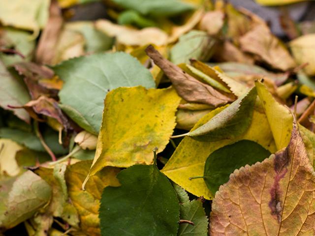 落ち葉の写真(フリー素材)