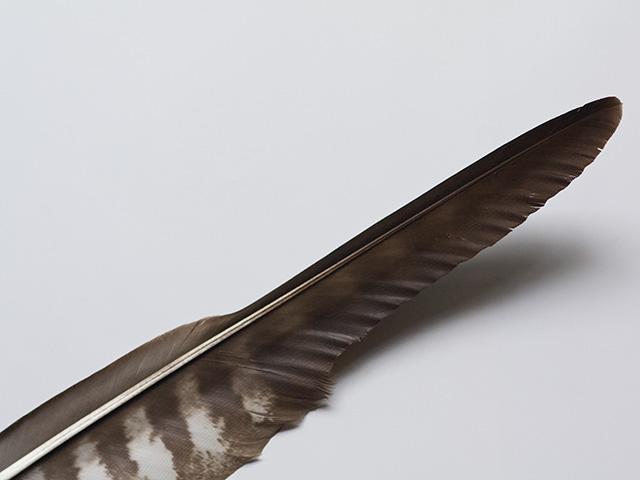 羽根(はね)の写真(フリー素材)