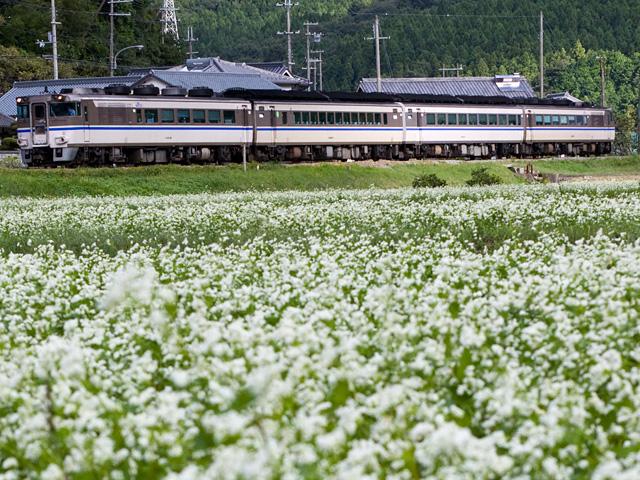 はまかぜ キハ181系と蕎麦(そば)の花の写真(フリー素材)
