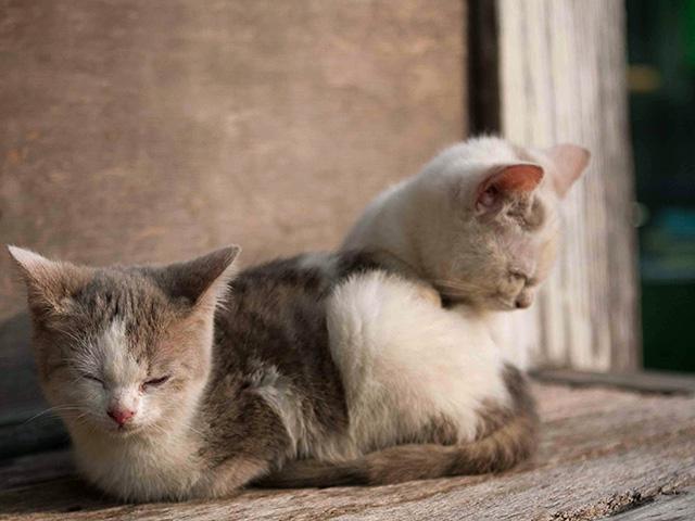 子猫(こねこ)の写真(フリー素材)