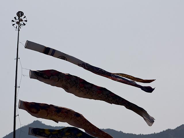 鯉のぼりの写真(フリー素材)
