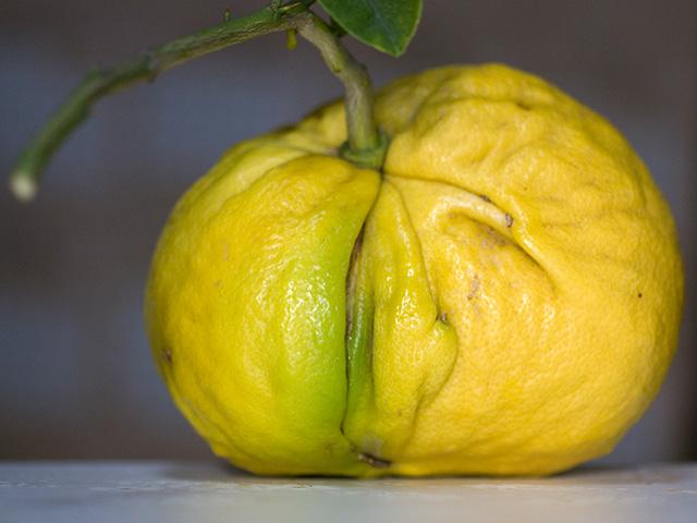 檸檬(レモン)の写真(フリー素材)