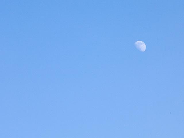 昼の月の写真(フリー素材)