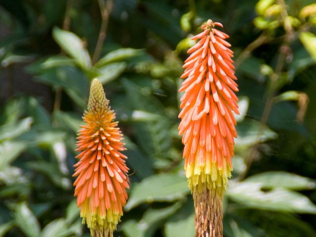 オレンジ色の花の写真(フリー素材)