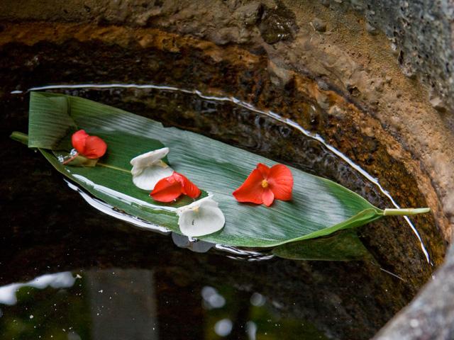笹舟(ささぶね)の写真(フリー素材)