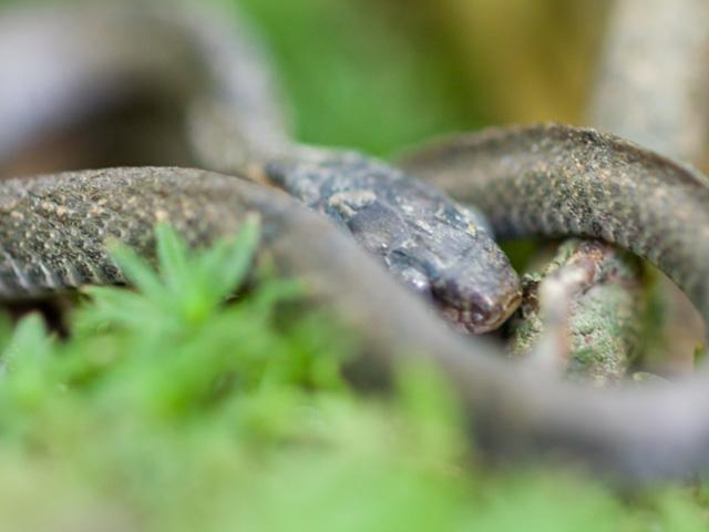 蛇(へび)の写真(フリー素材)