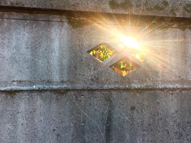 太陽の光の写真(フリー素材)