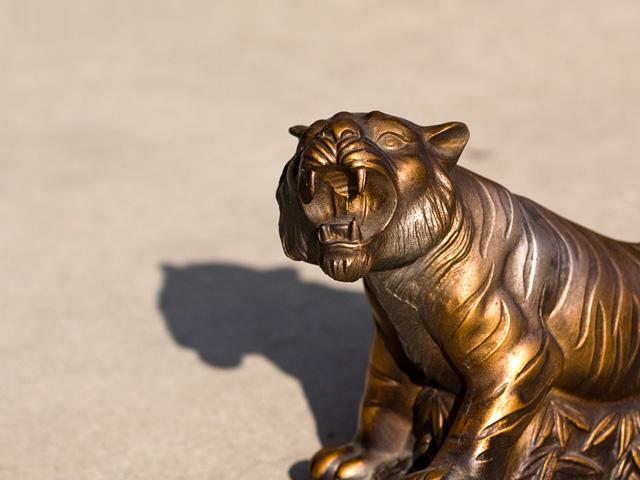 虎(トラ)の写真(フリー素材)