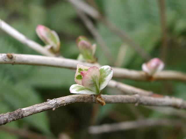 花のような葉のようなの写真(フリー素材)